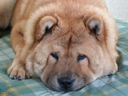 Foto de un perro. No compres, adopta.